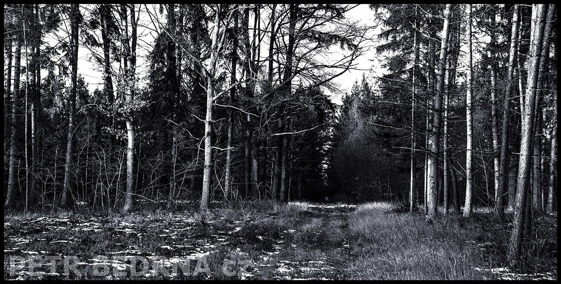 Černý les, Pozdeň, Slaný, 2011