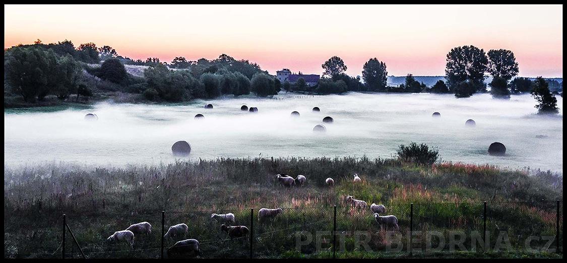Mlha, louky, 2013, Ovce, Burg Klempenow, Německo(5)