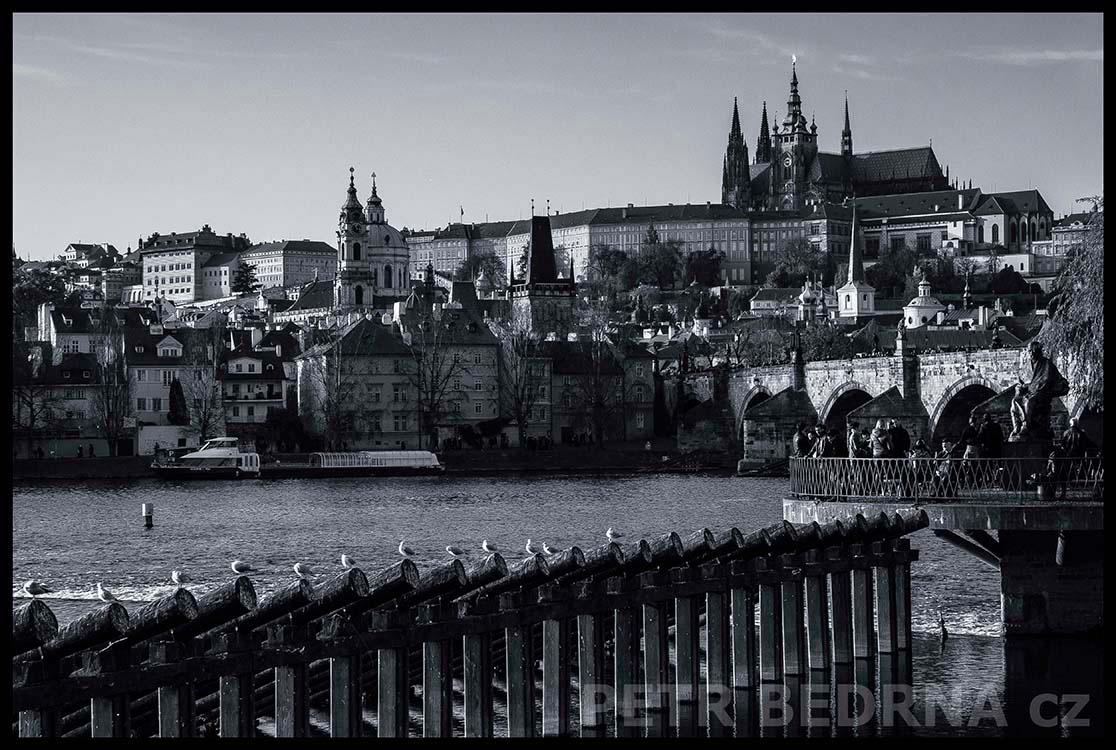 Karlův most, Pražský hrad, holubi, 2014, Novotného lávka, Praha