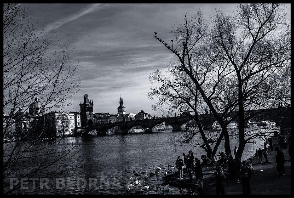 Karlův most, Malá Strana, Labutě, Praha(2)